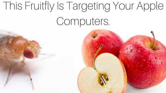 Fruitfly Apple Computers